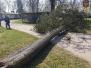 2019.04.23 Drzewo powalone na linię energetyczną Różnowo