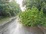 2020.06.18 Drzewo na drodze Wadąg-Słupy
