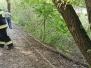2020.06.30 Drzewo nad ścieżką przy jez. Dywickim